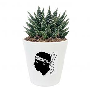 Plante grasse personnalisée A Bandera Corsa