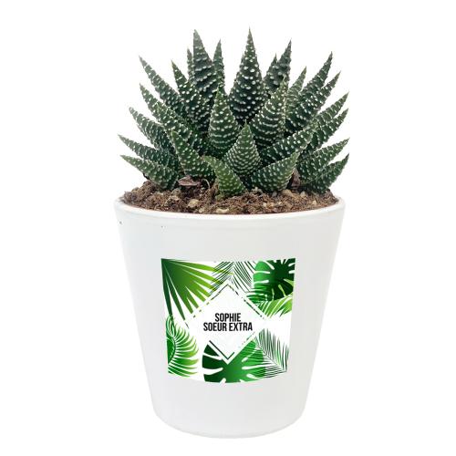 Plante Haworthia et son étiquette personnalisée Summertime