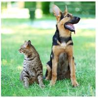 Accessoires animaux personnalisés et médailles chien et chat gravés